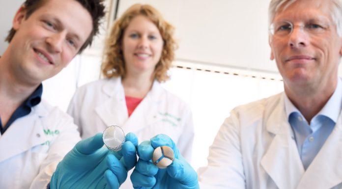 Onderzoekers Bart Sanders, Sandra Loerakker en Frank Baaijens met de door hun ontwikkelde hartklep. Rechts de kunststof mal, ontworpen op basis van geavanceerde computermodellen. Links de hartklep die met behulp van deze mal gekweekt is. Na de kweek worden de cellen uit de hartklep verwijderd, waarna een celloze extracellulaire matrix (ECM) overblijft. Deze ECM wordt geïmplanteerd in het lichaam en trekt vervolgens cellen vanuit de bloedbaan en omliggend weefsel aan om weer een levende hartklep te worden. Foto: Bart van Overbeeke/TU Eindhoven